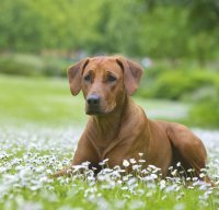 Epulis In Dogs Natural Treatment