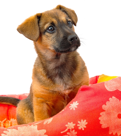 Natural Home Remedies For Dog Uti