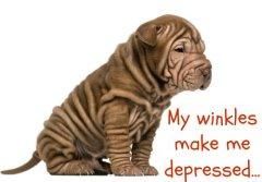 Depressed Shar Pei