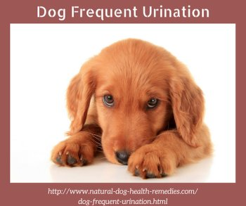 Dog Frequent Urination
