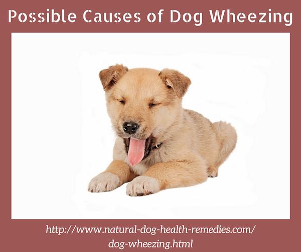 Causes of Dog Wheezing