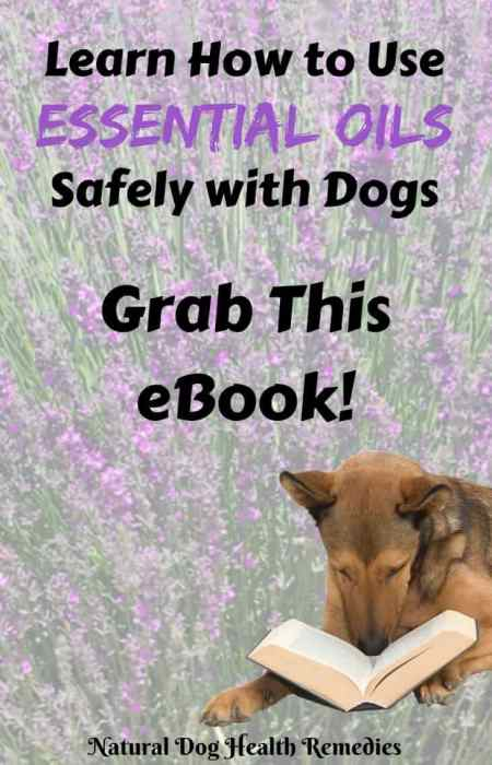 Aromatherapy for Dogs eBook