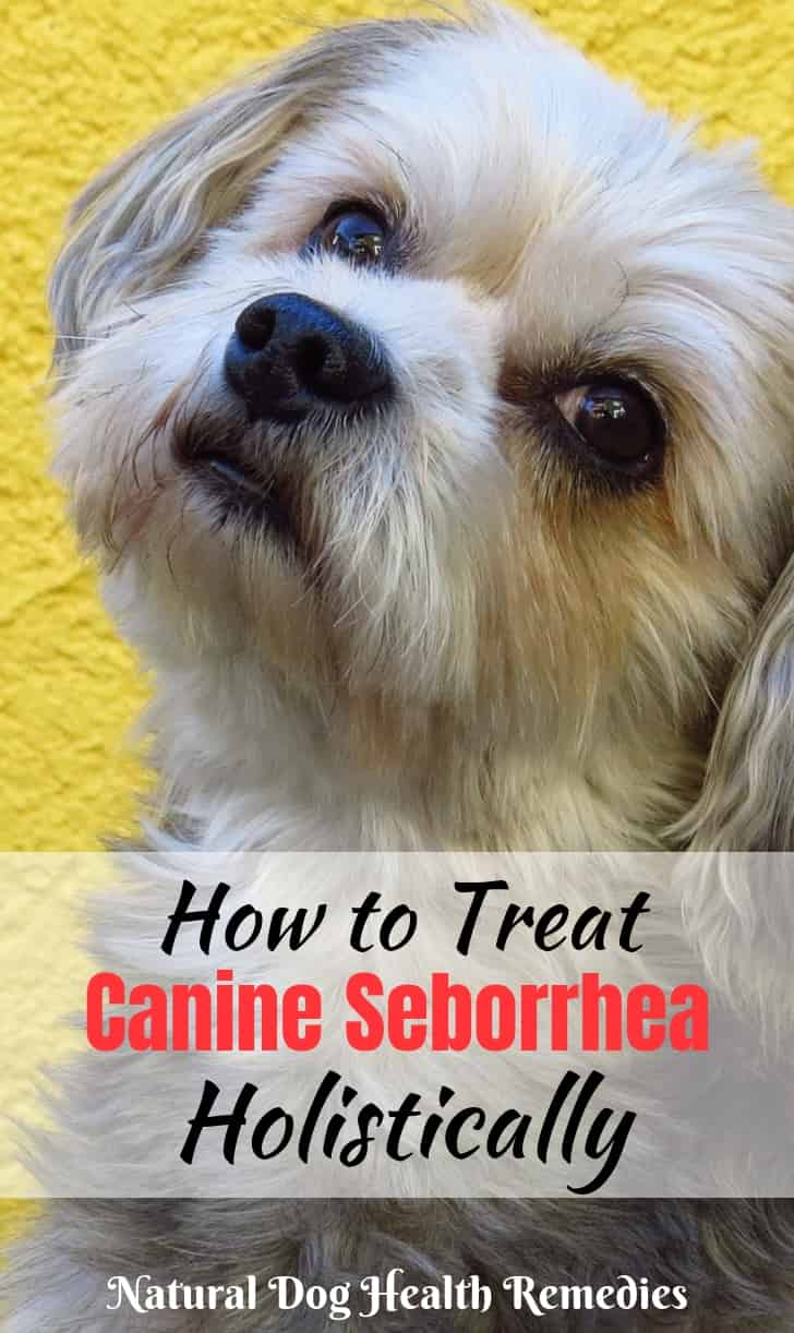 Canine Seborrhea Natural Remedies