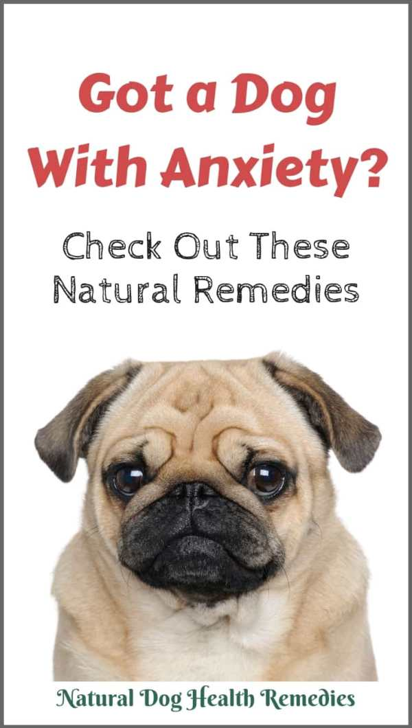 Natural Remedies for Dog Anxiety