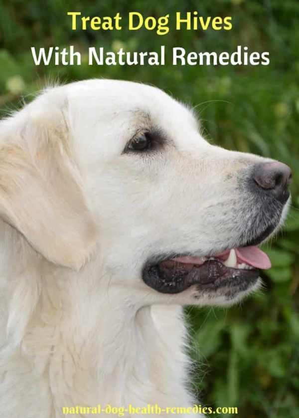 Dog Hives Natural Treatment