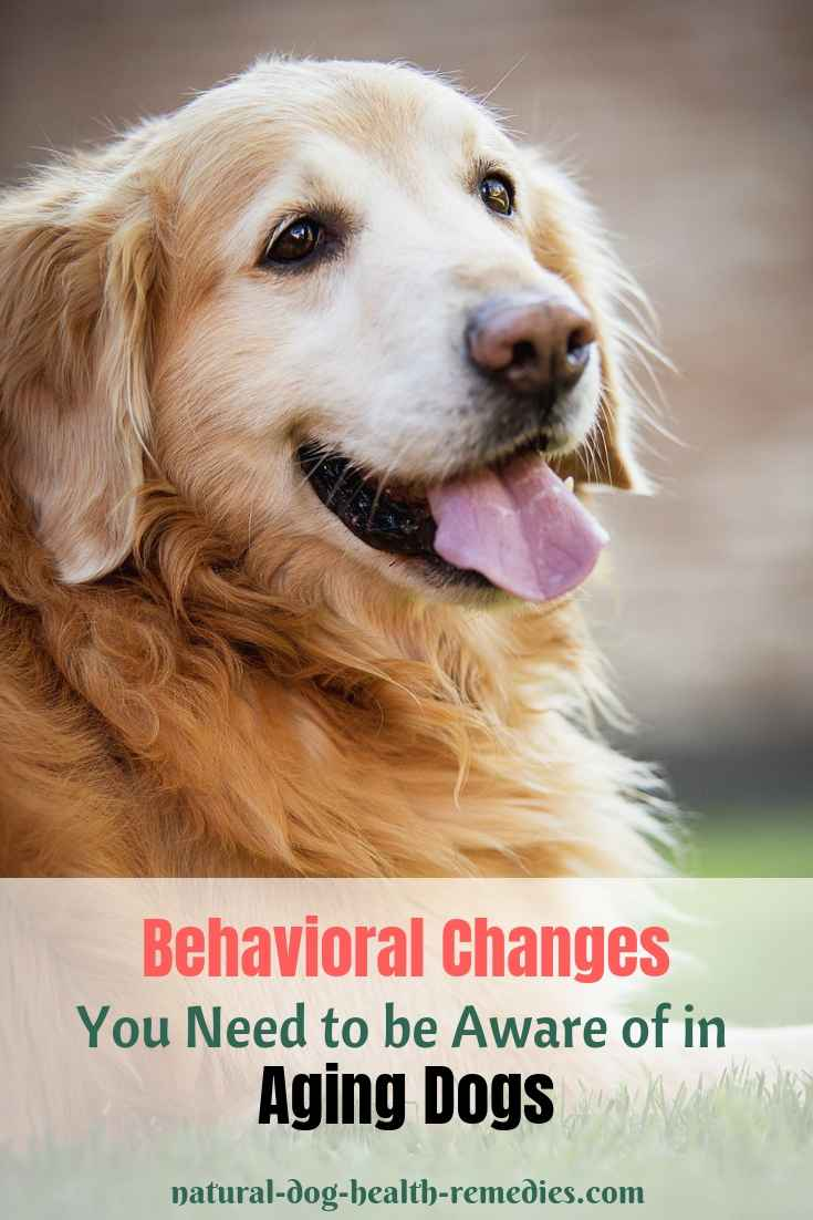 Aging Dog Behavior