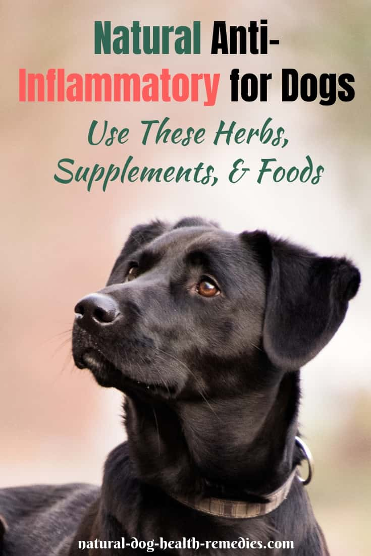 Natural Anti-Inflammatory for Dogs