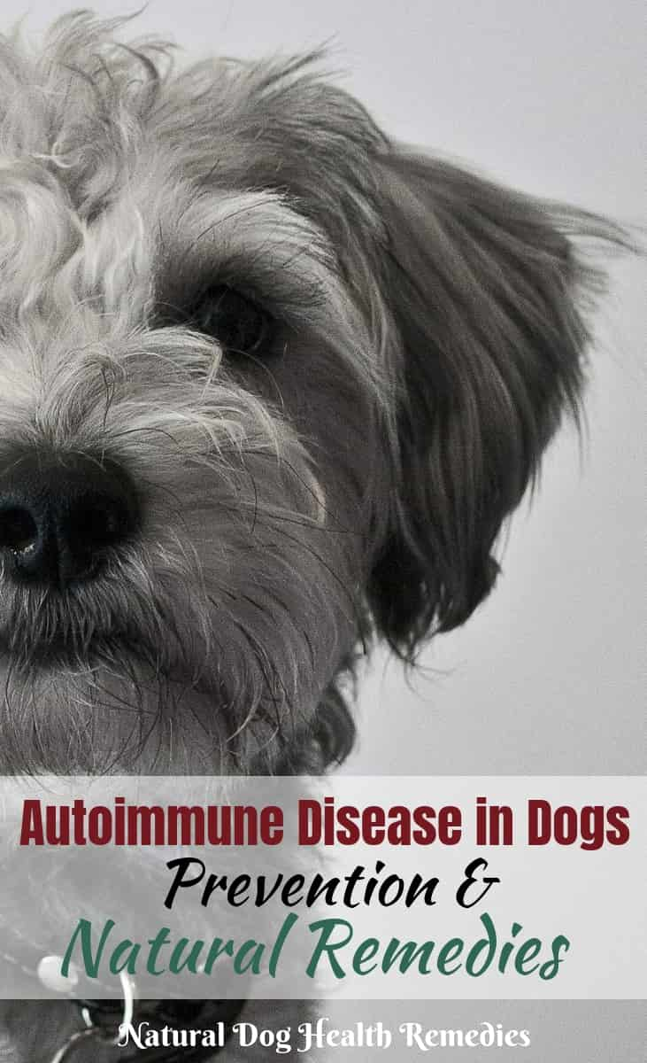 Autoimmune Disease in Dogs - Causes and Natural Treatment