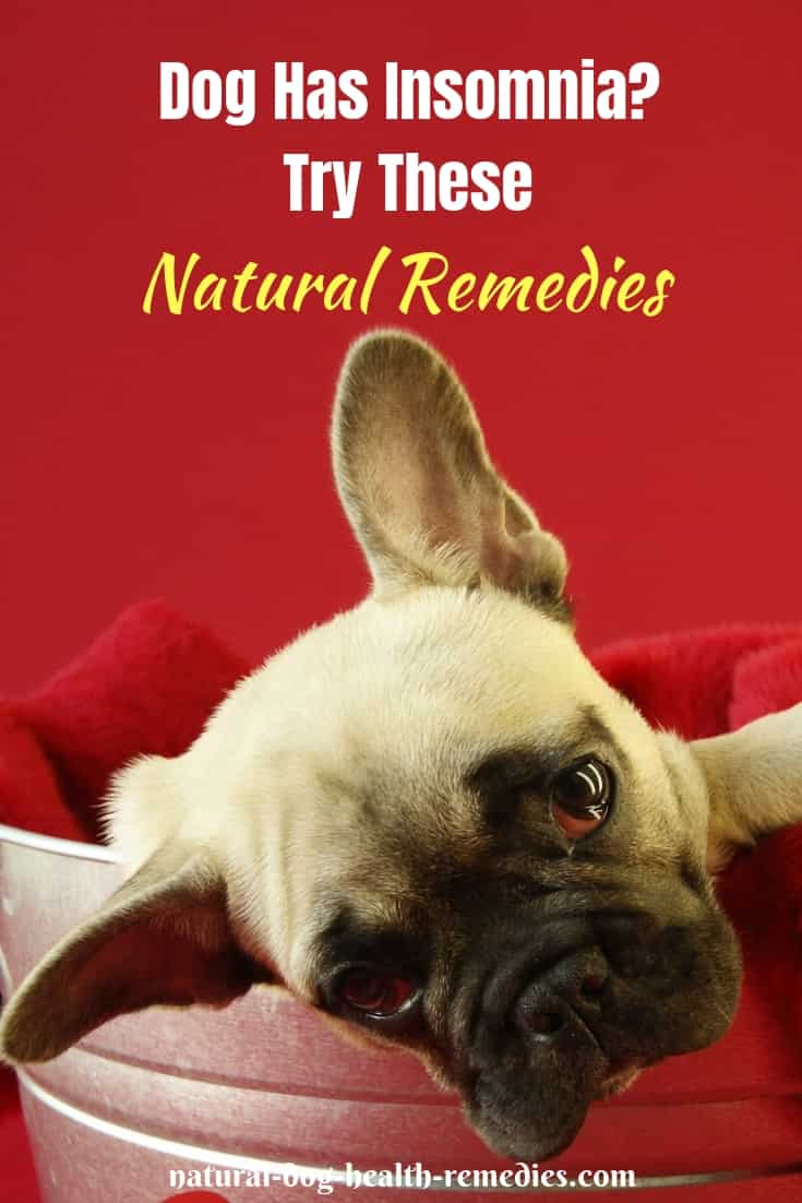 Canine Insomnia Natural Remedies