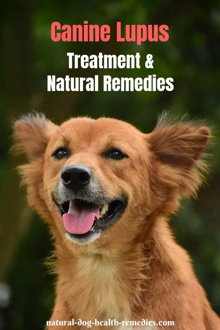 Canine Lupus Natural Remedies