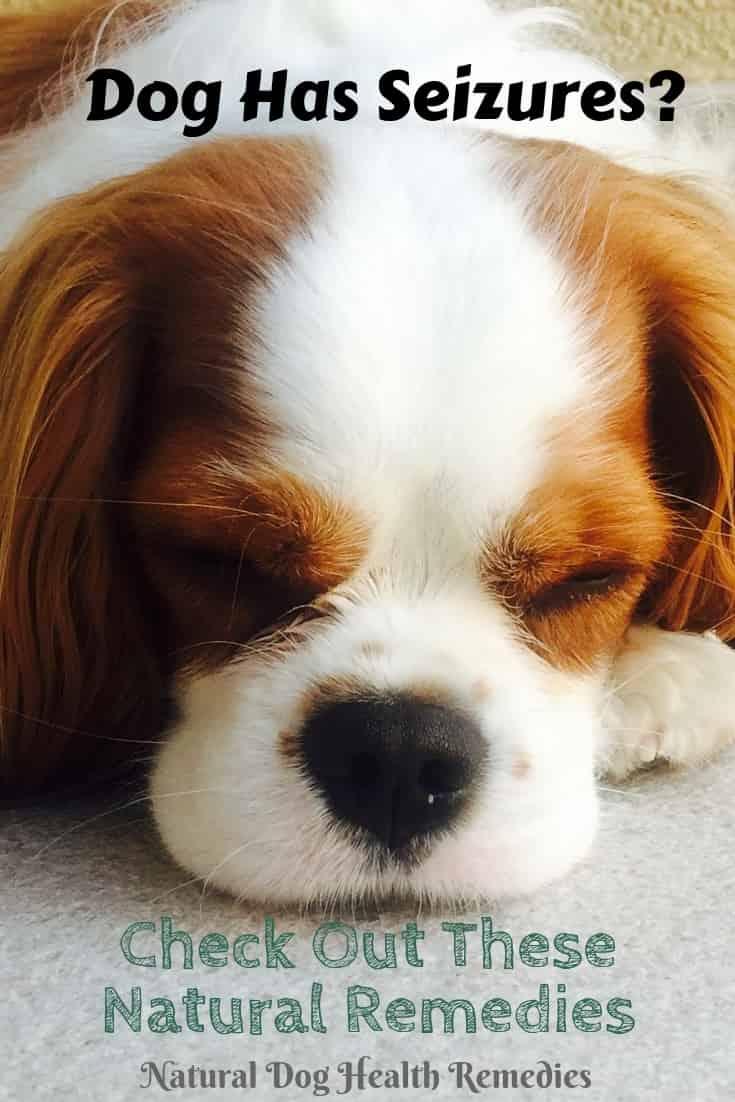 Canine Seizure Natural Remedies