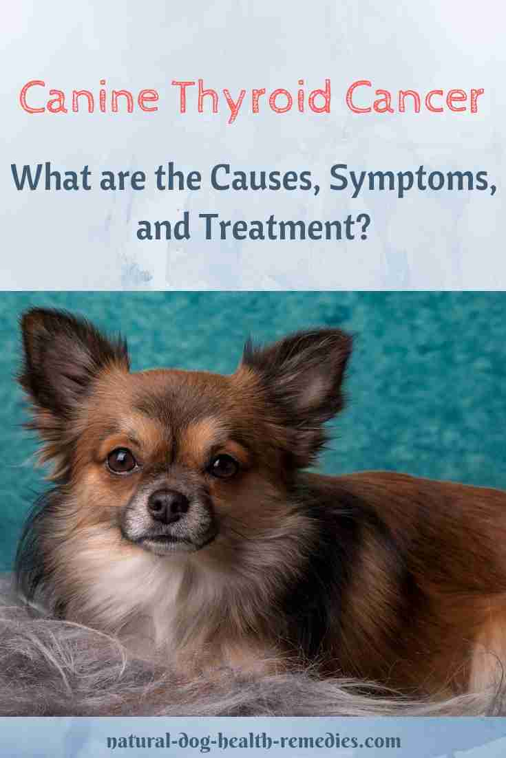 Canine Thyroid Cancer Treatment