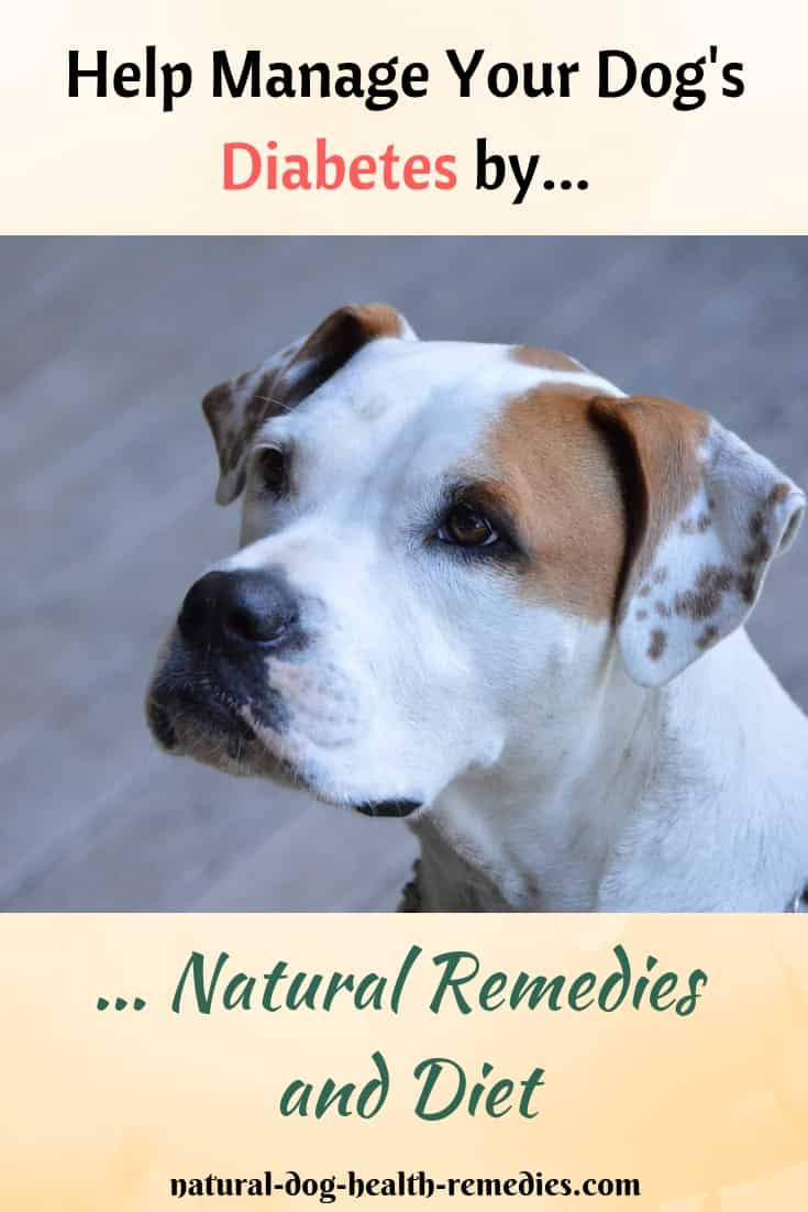 Manage Diabetes in Dogs Holistically