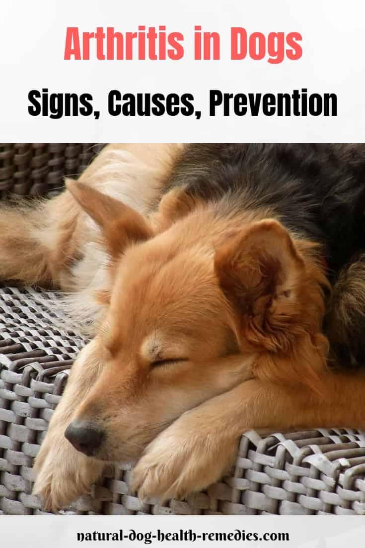 Dog Arthritis Prevention