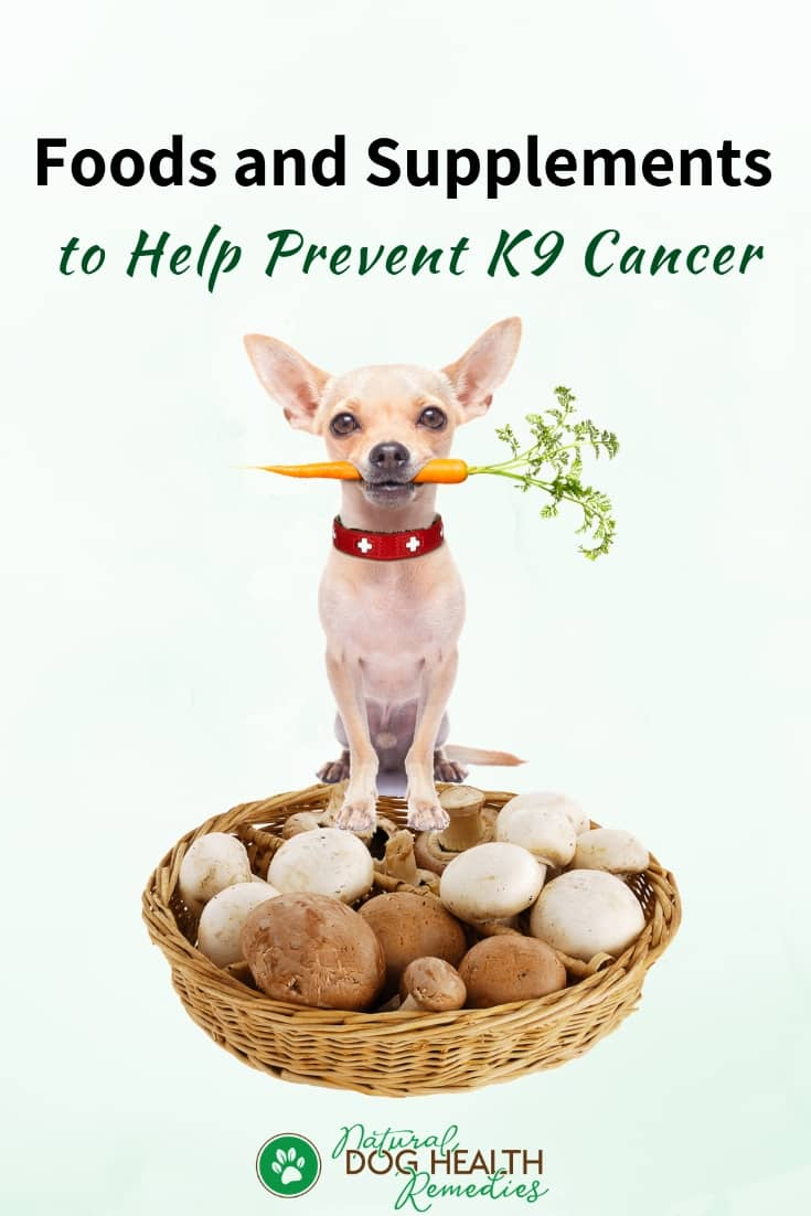 Foods to Prevent Canine Cancer