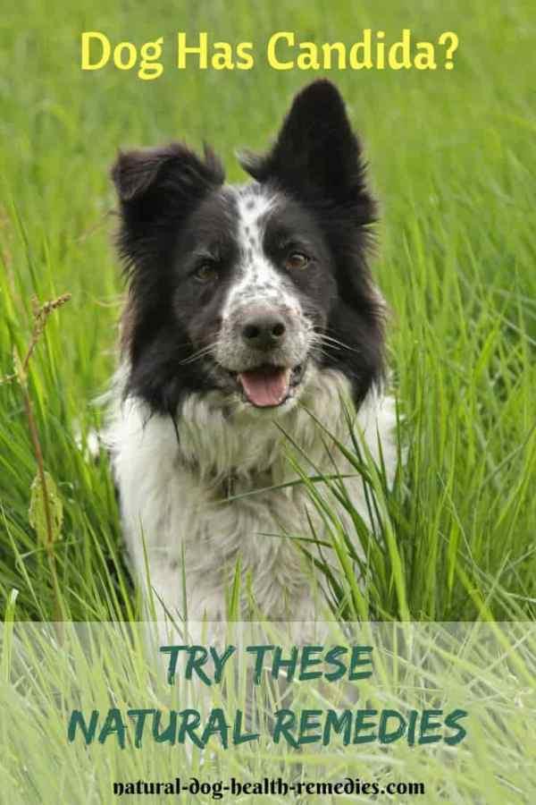 Natural Dog Candida Remedies