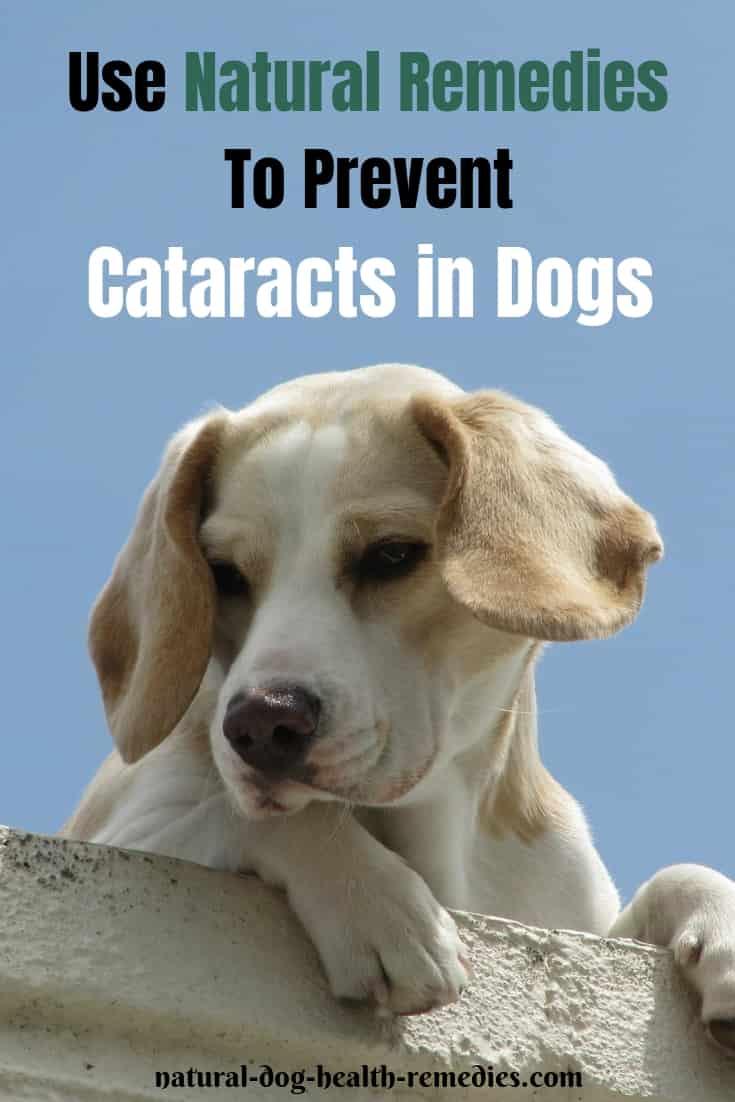 Dog Cataract Remedies