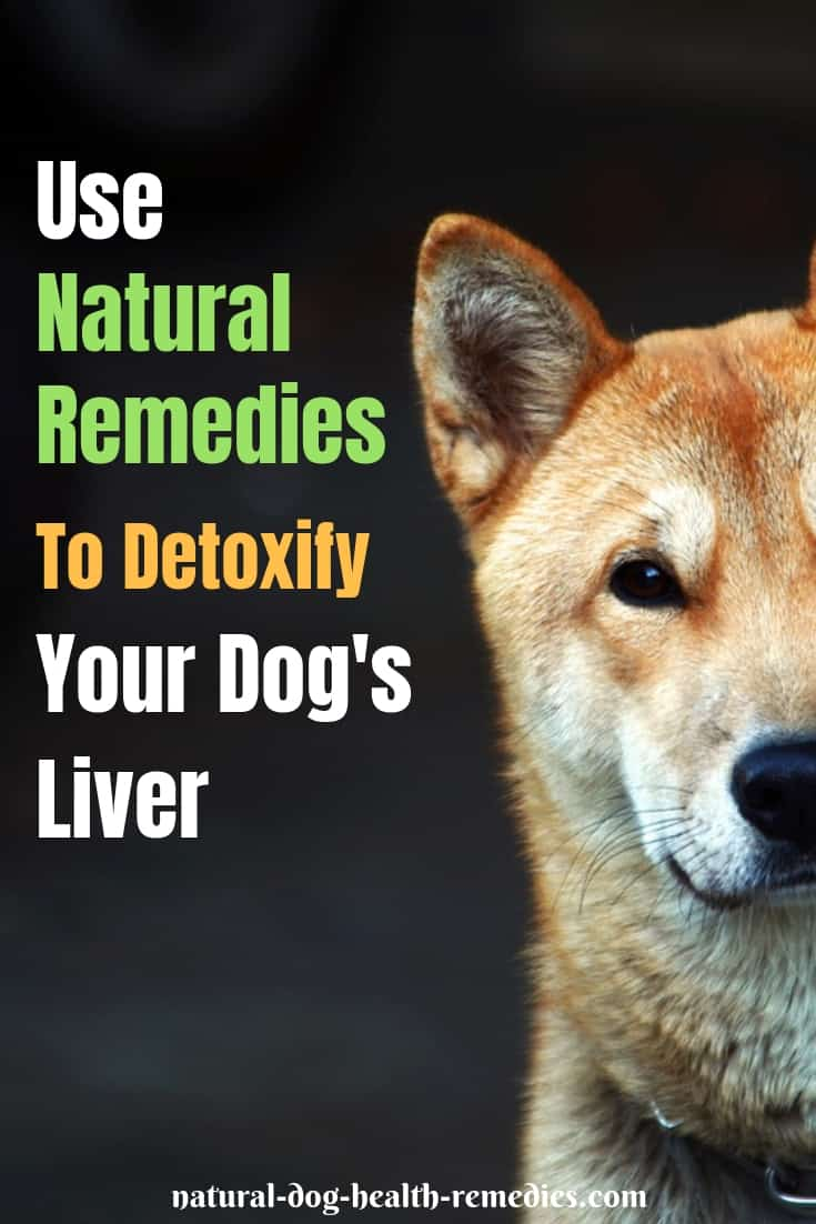 How To Detoxify a Dog