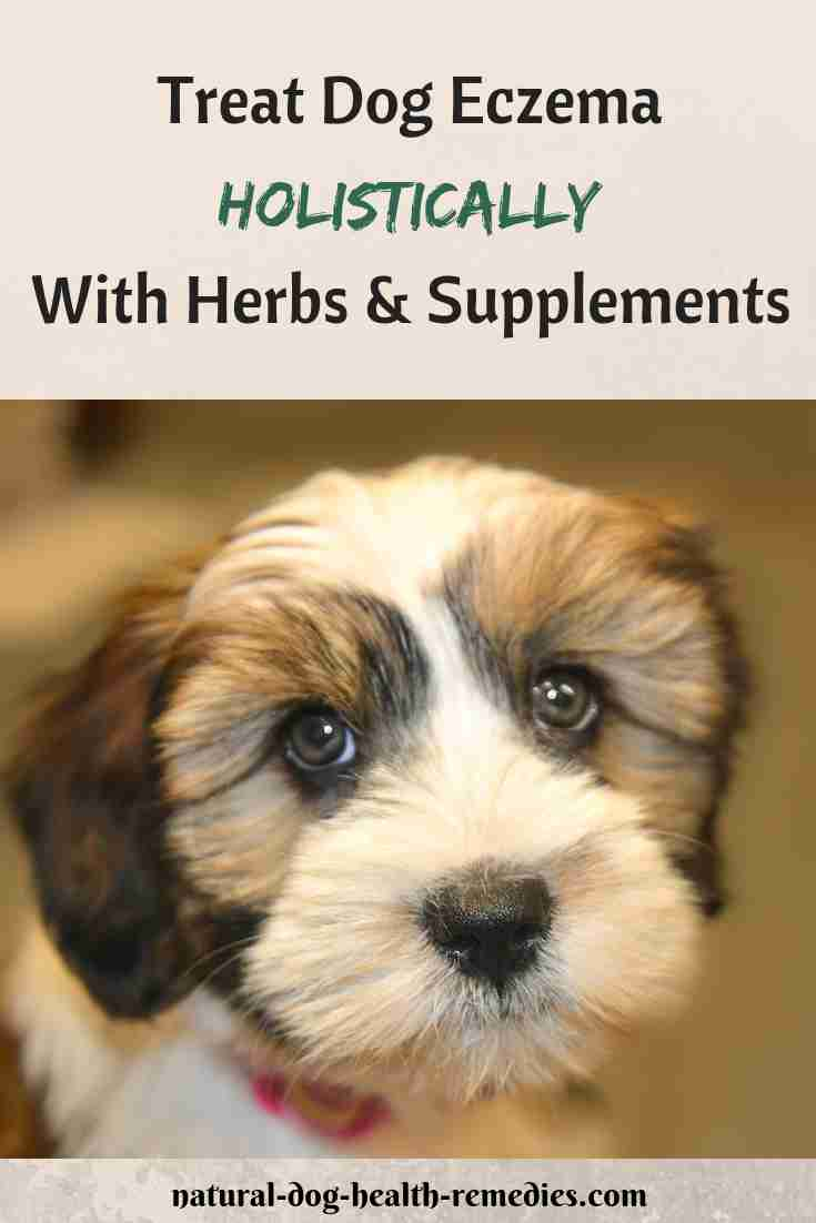 Dog Eczema Natural Remedies