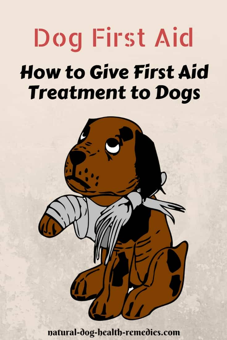 How to Give First Aid Treatment to Dogs