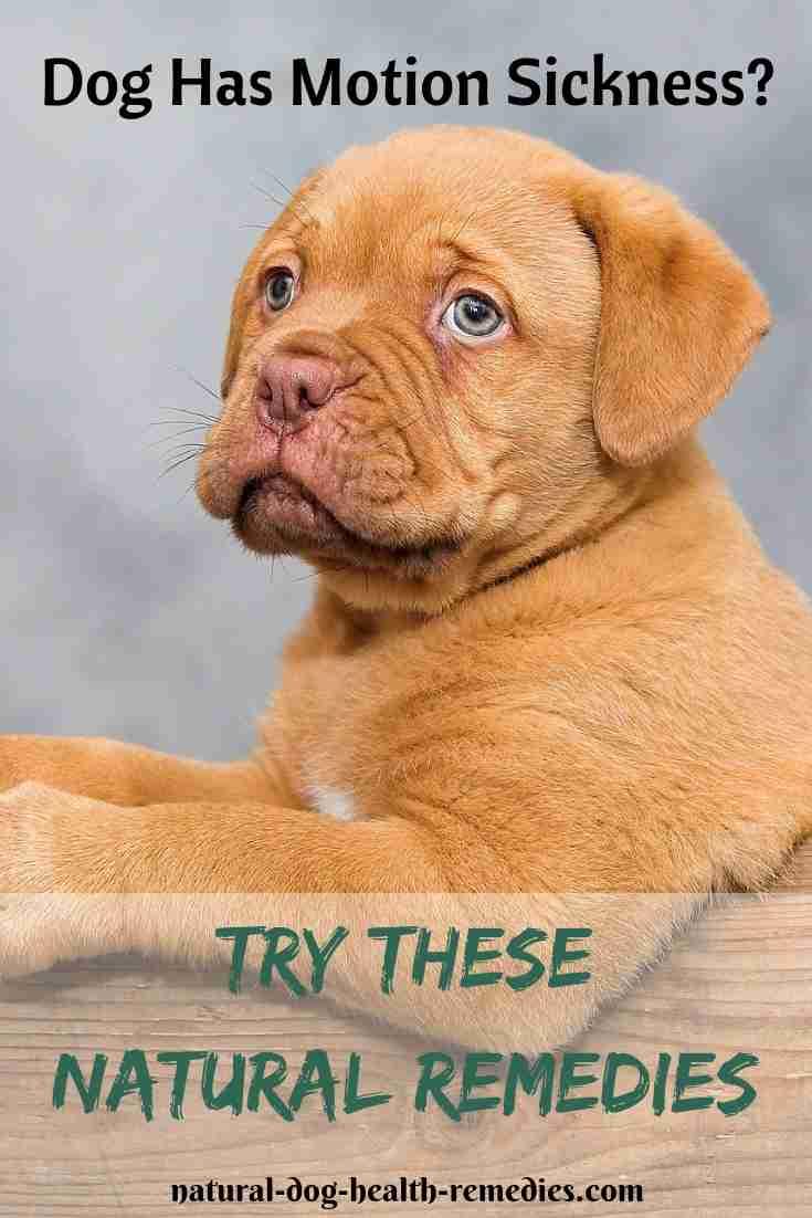 Dog Motion Sickness Natural Remedies