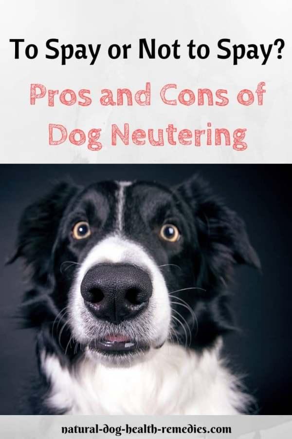 Dog Neutering Pros & Cons