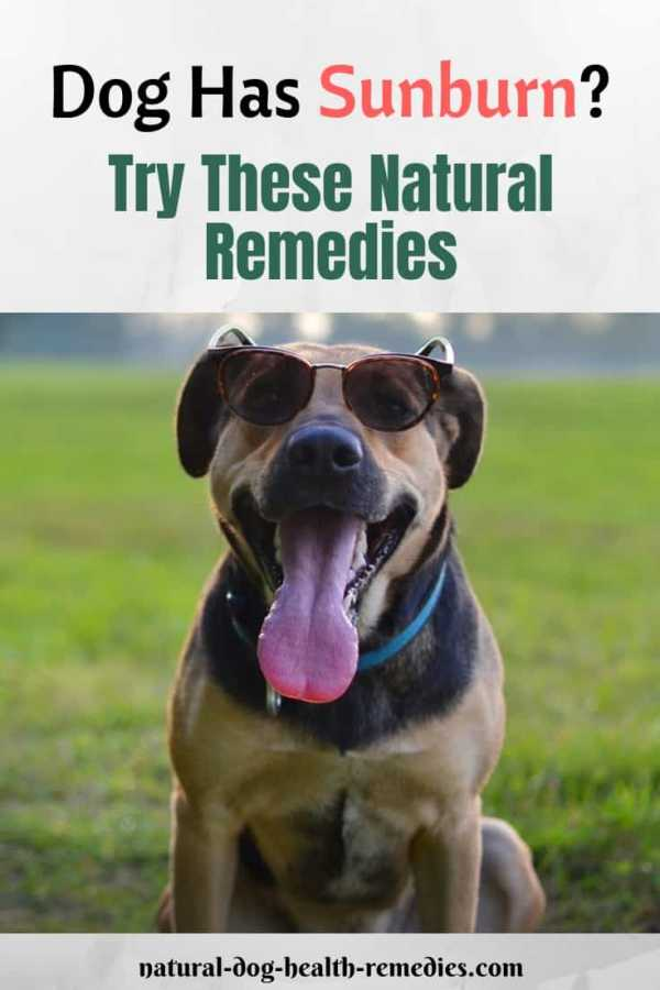 Dog Sunburn Natural Remedies