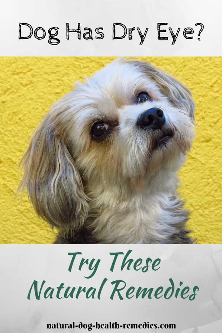 Natural Remedies for Dry Eye in Dogs