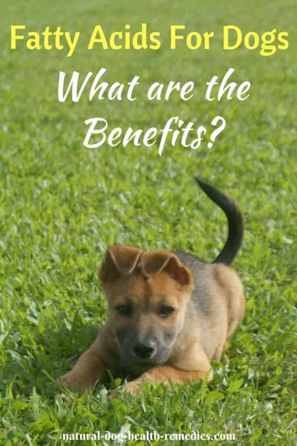 Benefits of Fatty Acids for Dogs