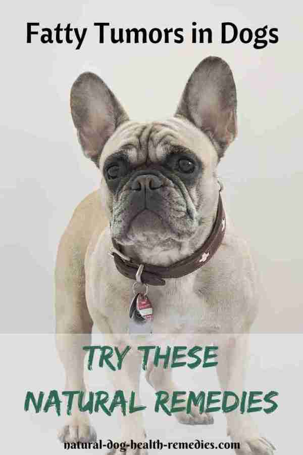 Dog Fatty Tumors Natural Treatment