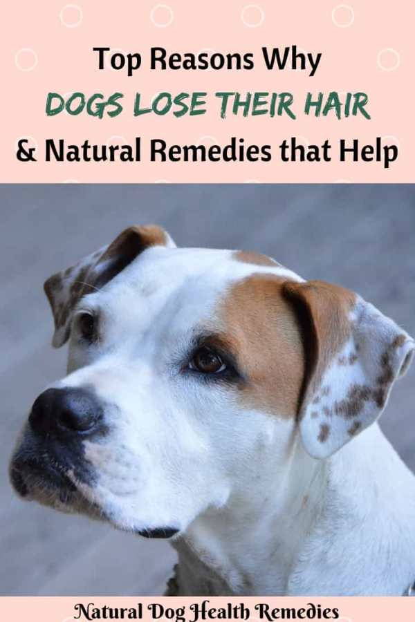 Causes of Hair Loss in Dogs