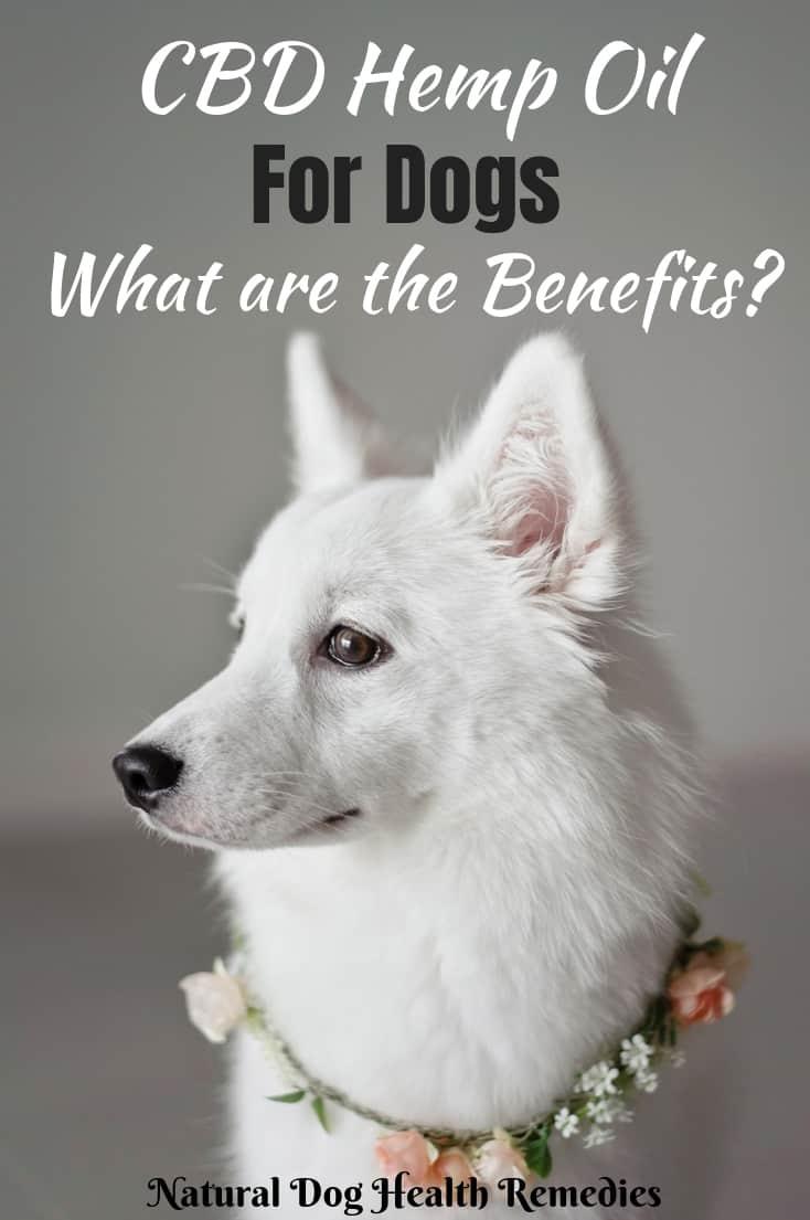 CBD Hemp Oil Benefits for Dogs