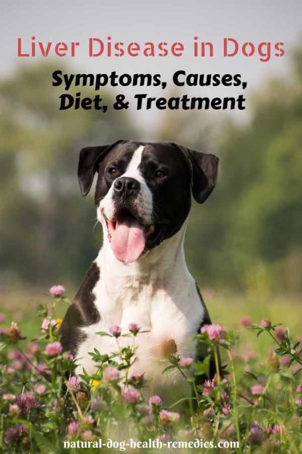 Dog Liver Disease Diet