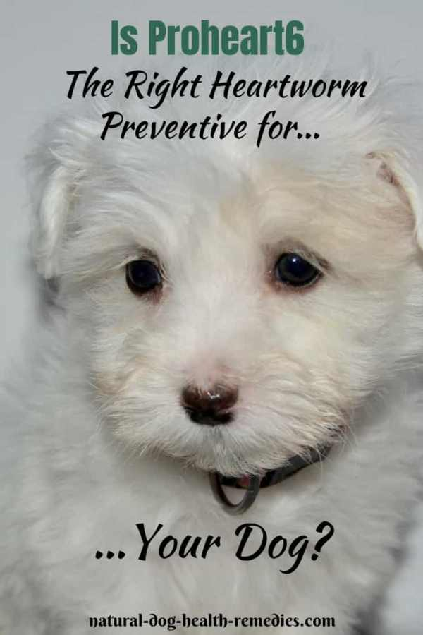 Proheart6 for Heartworm Prevention in Dogs