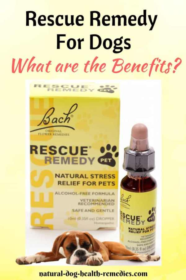 Rescue Remedy for Dogs