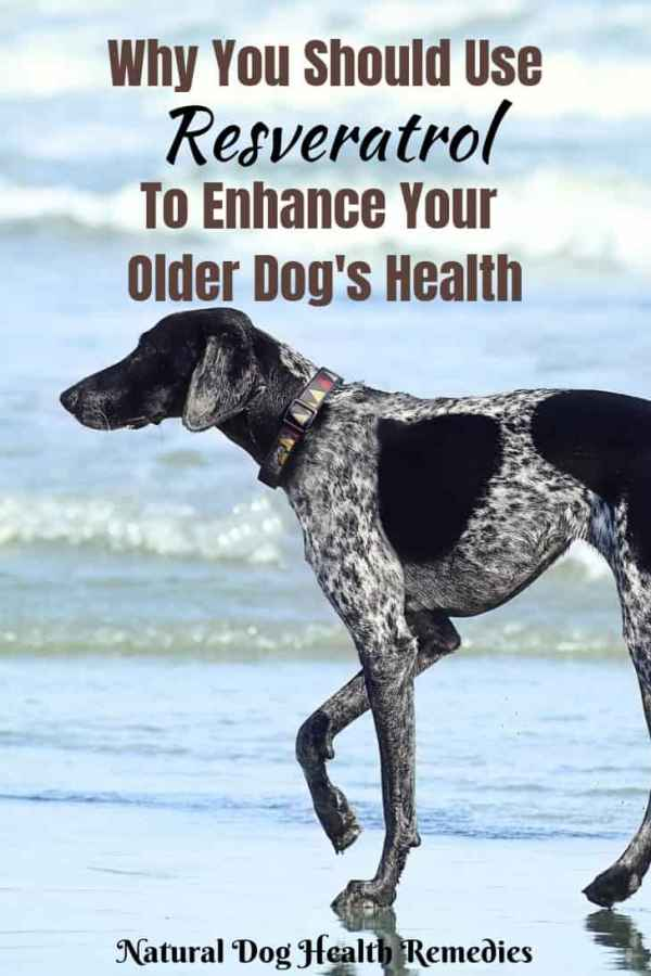 Resveratrol Benefits to Dogs