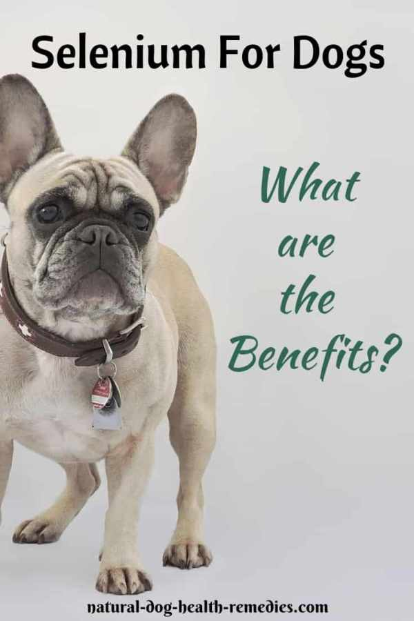 Selenium Benefits to Dogs
