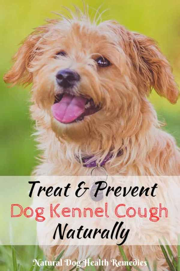 Treating Kennel Cough at Home