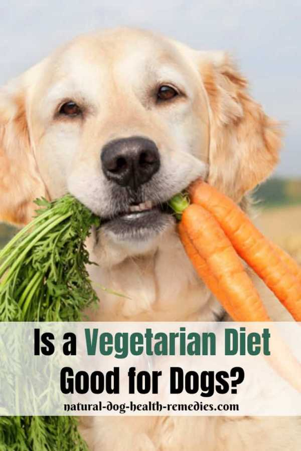 Vegetarian Diet for Dogs