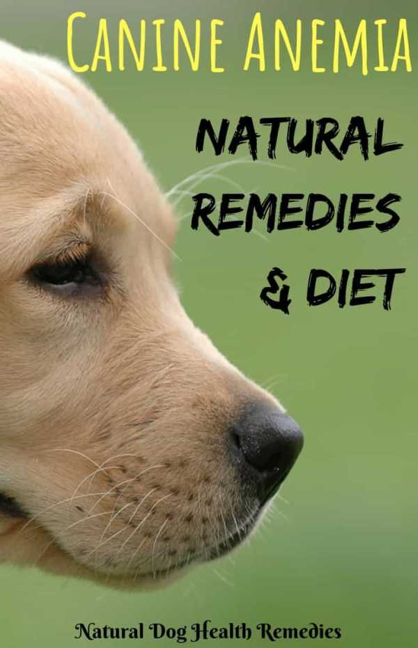 How to Cure Anemia in Dogs