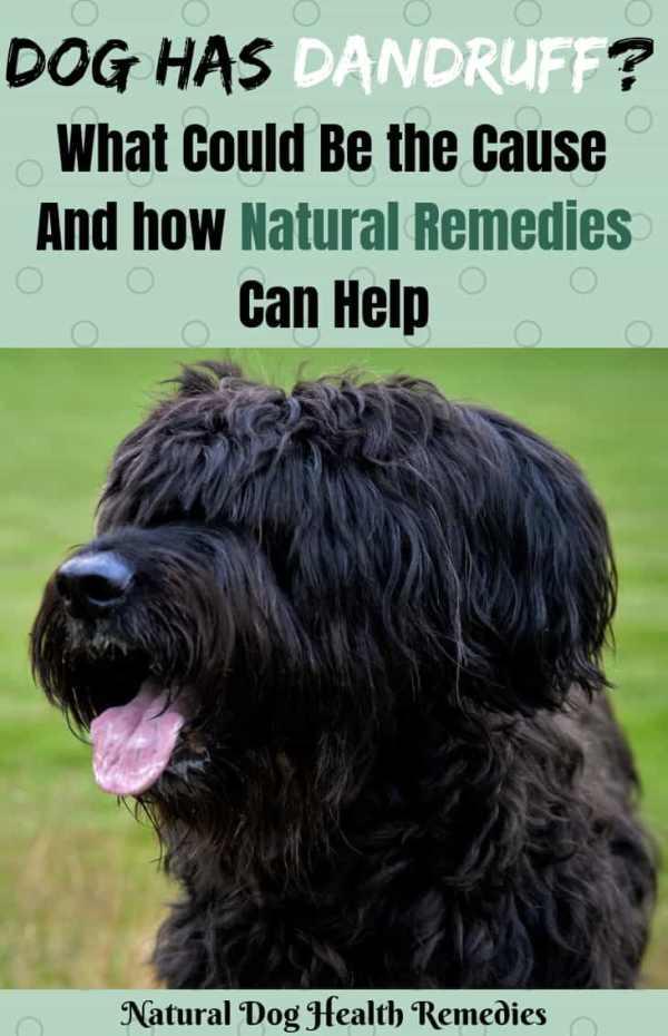 Dog Dandruff Home Remedies