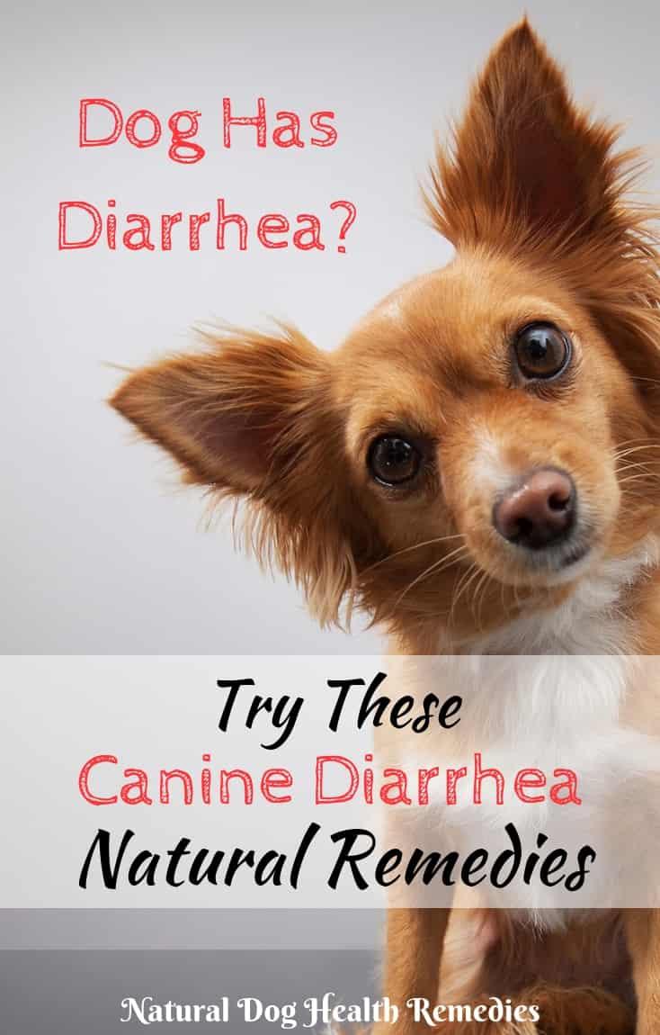 Canine Diarrhea Remedies