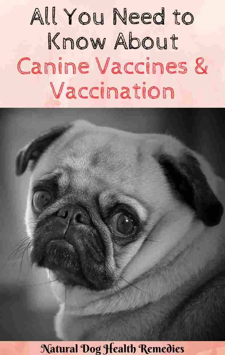 Canine Vaccines
