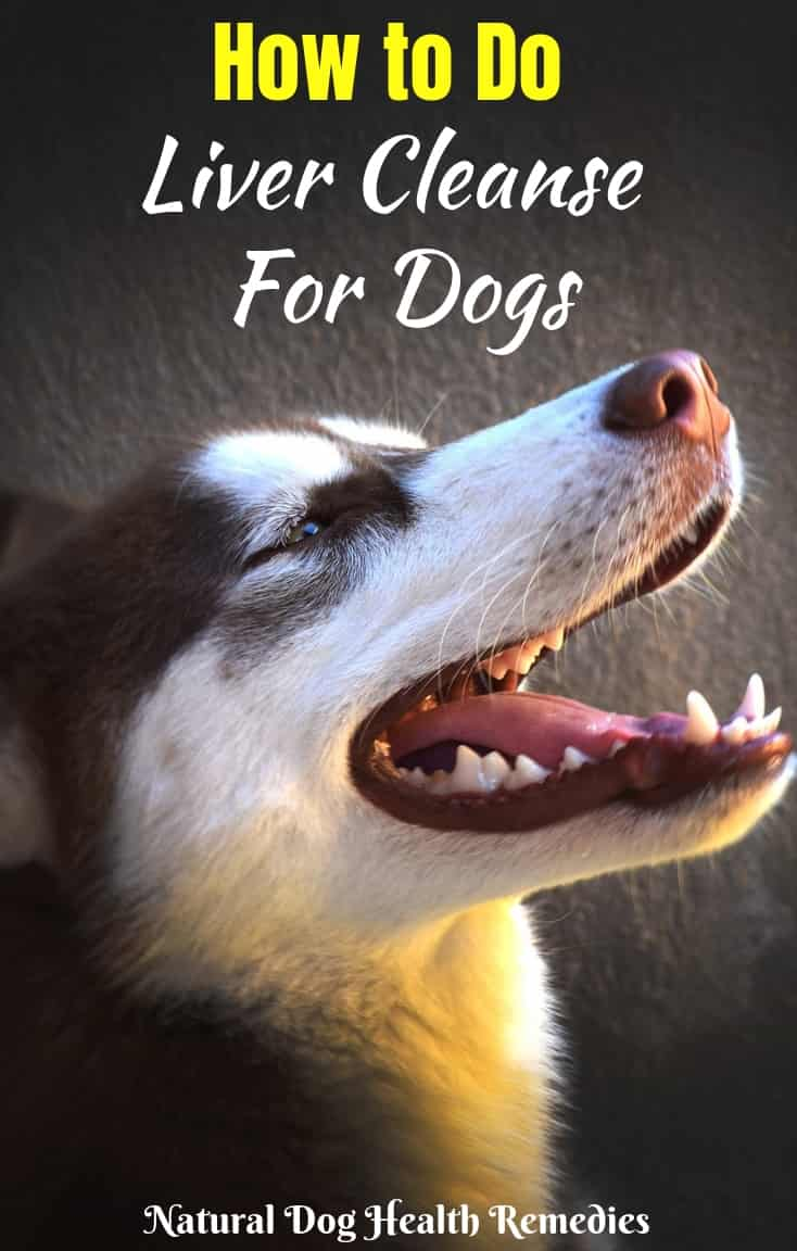 Liver Cleansing Diet for Dogs