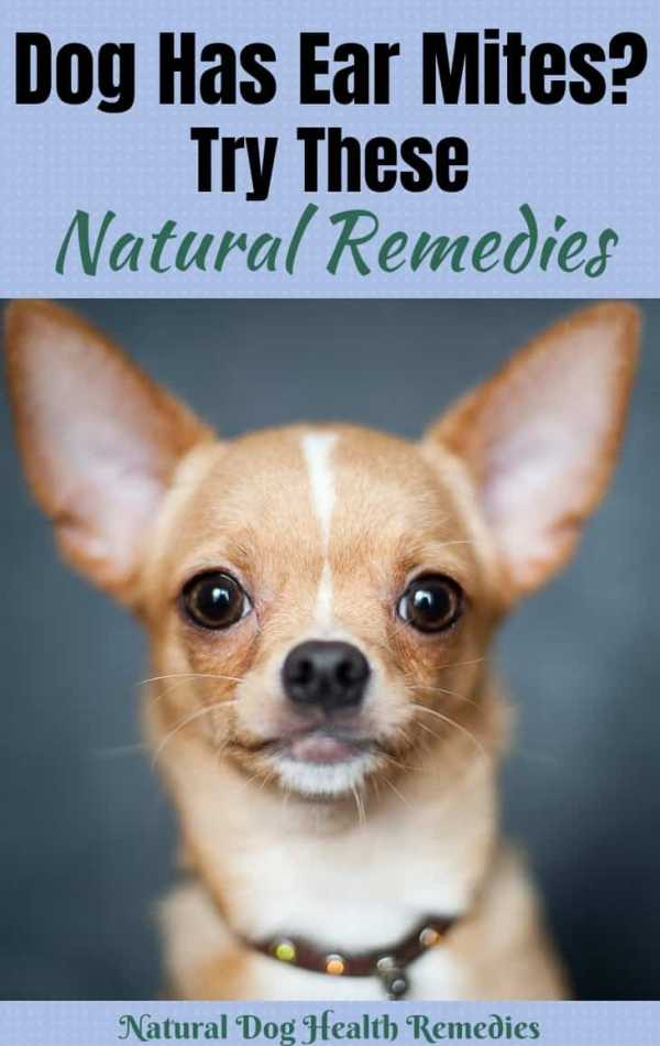 Dog Ear Mites Natural Home Remedies