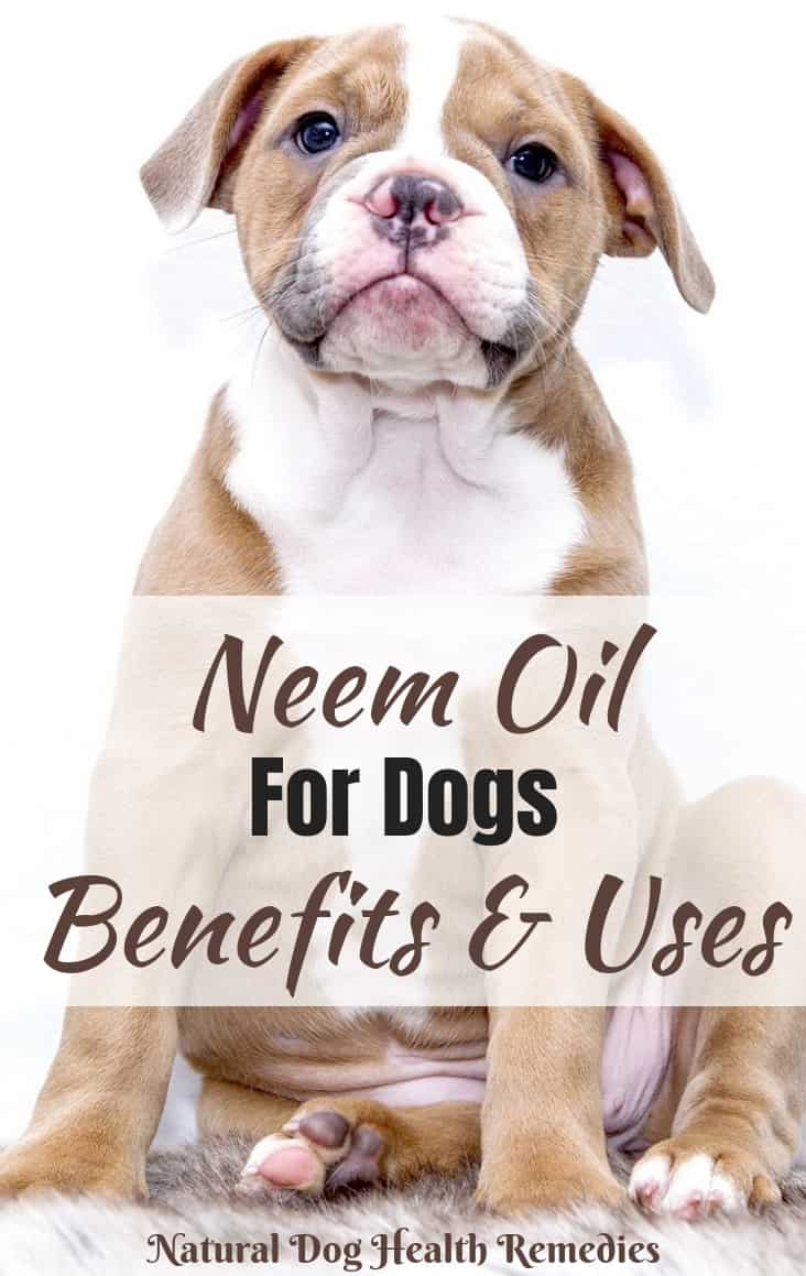 Neem Oil Benefits for Dogs