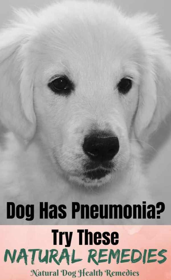 Dog Pneumonia Home Treatment