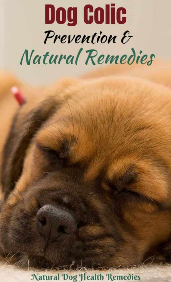 Dog Colic Symptoms How To Relieve Gas Pain In Dogs Amp Puppies