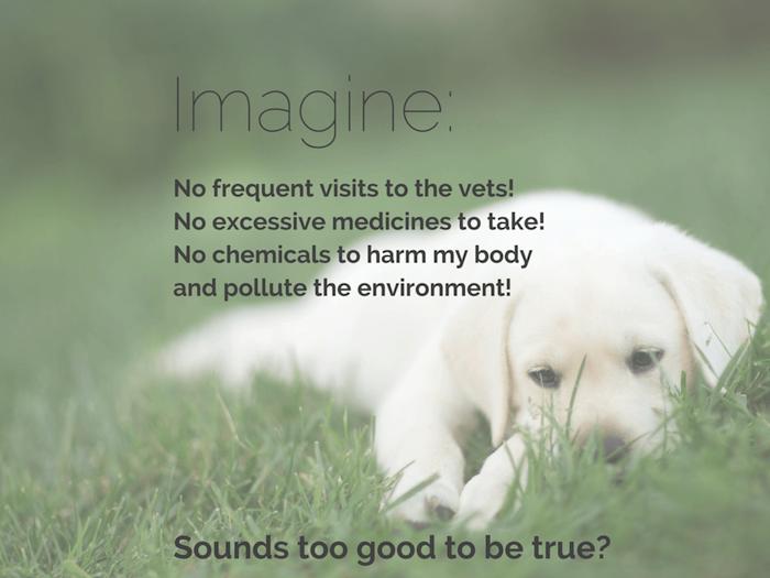 Natural Dog Health Remedies Index Pic