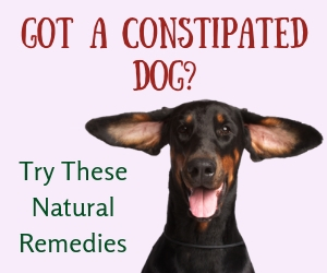 Canine Constipation Remedies